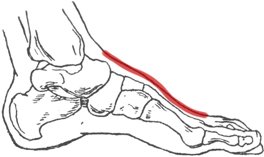 pijn bovenkant voet
